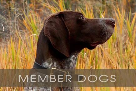 member-dogs